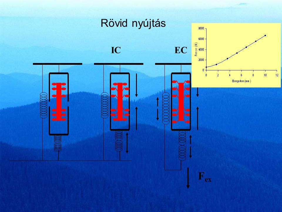 Edman et al. 1999 Az izom pillanatnyi hosszának hatása a feszülés növekedésre 1.41.61.8