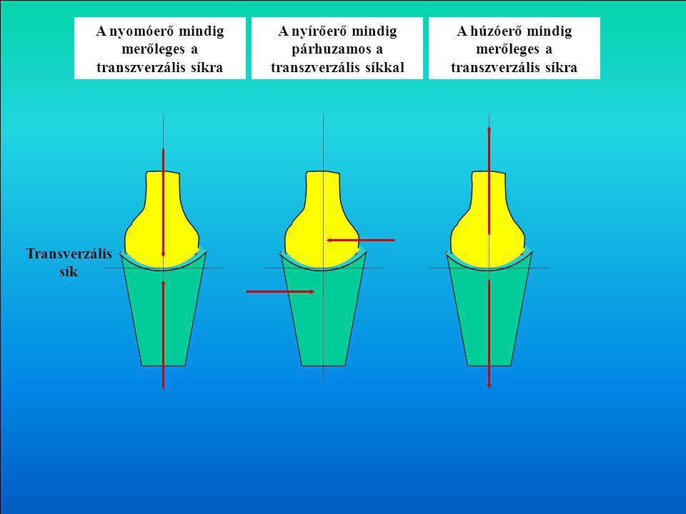 A nyomóerő mindig merőleges a transzverzális síkra A húzóerő mindig merőleges a transzverzális síkra A nyírőerő mindig párhuzamos a transzverzális síkkal Transverzális sík