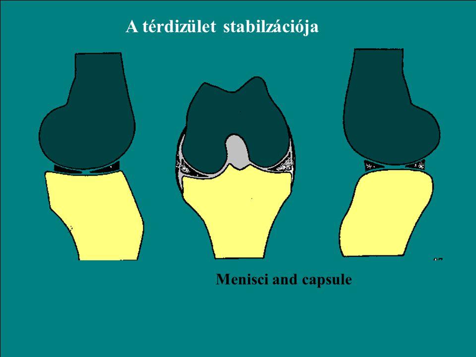 Transzlációs mozgás a térdízületben MedialisLateralis 6 mm 12 mm