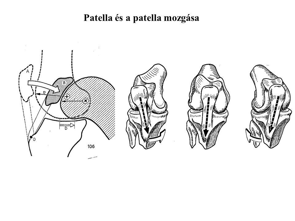 Citation: Trilha Junior M, Fancello EA, Roesler CRM, More ADO. Three-dimensional numerical simulation of human knee joint mechanics. Acta Ortop Bras.