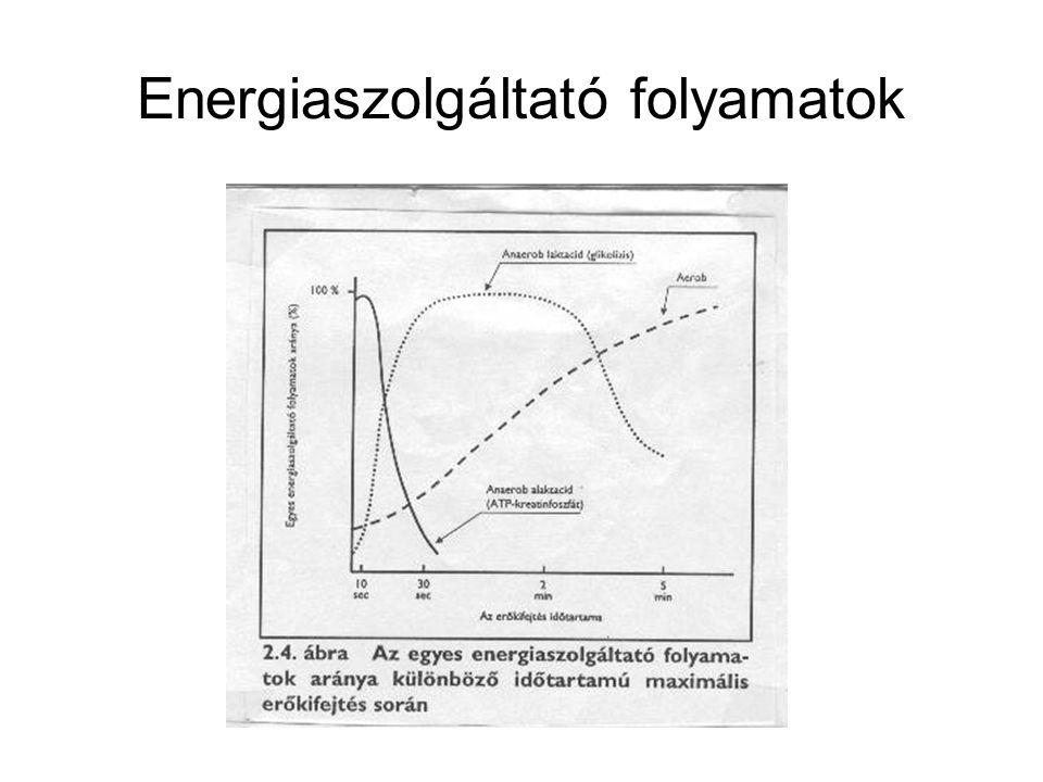 Az ATP és CrP felhasználása