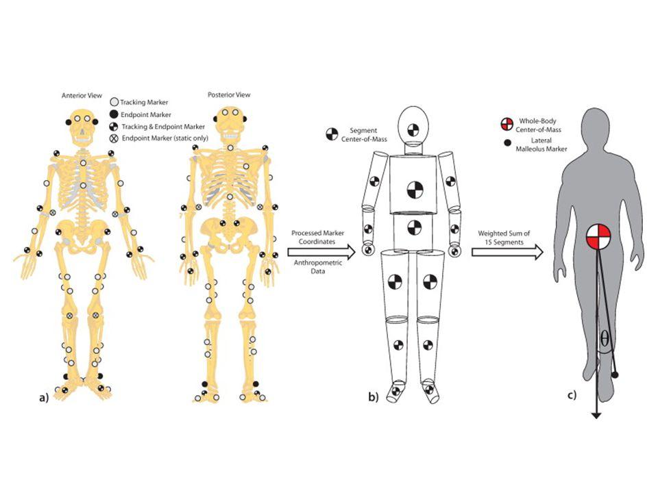 Testszegmensek Testmodell TömegarányokDigitális elemzés Markerek