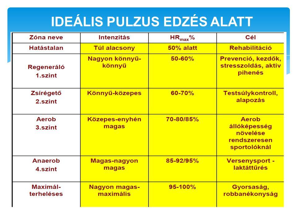 IDEÁLIS PULZUS EDZÉS ALATT