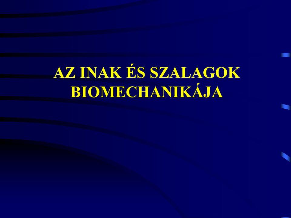 HUMAN MODELL Strain (%): Stress (MPa): In vivo ACL IdősFiatalRheosus majom 21.9 25.538.0 13.337.8 66.1 Strain (%): Stress (MPa): Tibialis anteriorPatella ín 2.517.9 2539.3