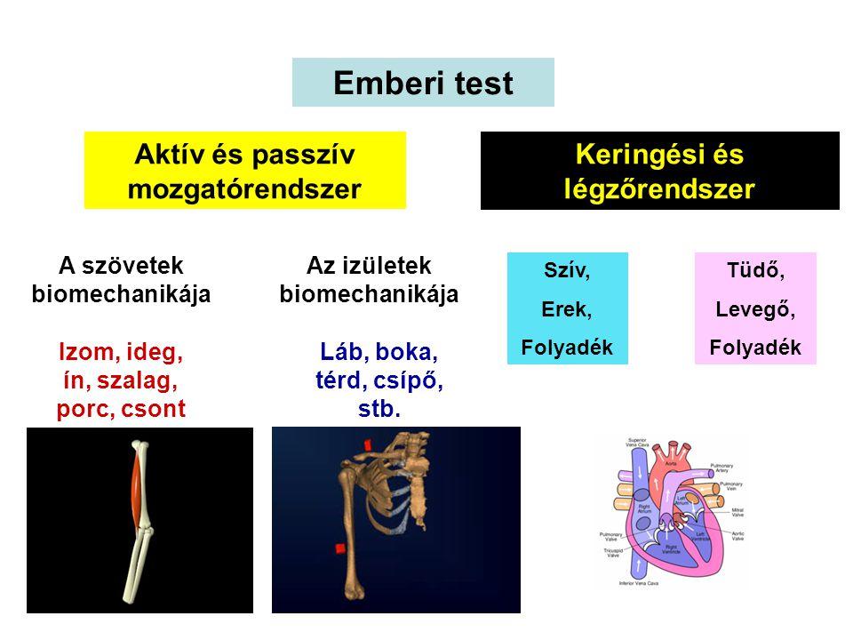BIOMECHANIKA Mechanika Biológiai anyag Emberi test Alap, normál mozgások Normáltól eltérő mozgások Célorientált mozgások Sport Foglalkozás Mindennapos tevékenység Talajon Vízben Levegőben