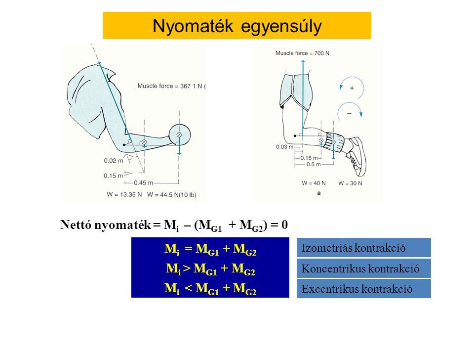 A három könyökhajlító forgatónyomatéka F k F1F1 F2F2 F3F3 k3k3 k2k2 k1k1 Túl sok izom: Az egyes izmok feszülése közvetlenül nem meghatározható