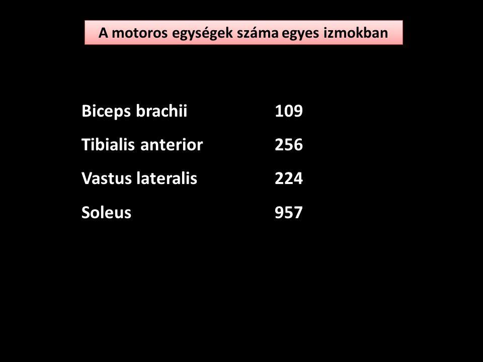 A motoros egység bekapcsolódási sorrend Méretelv