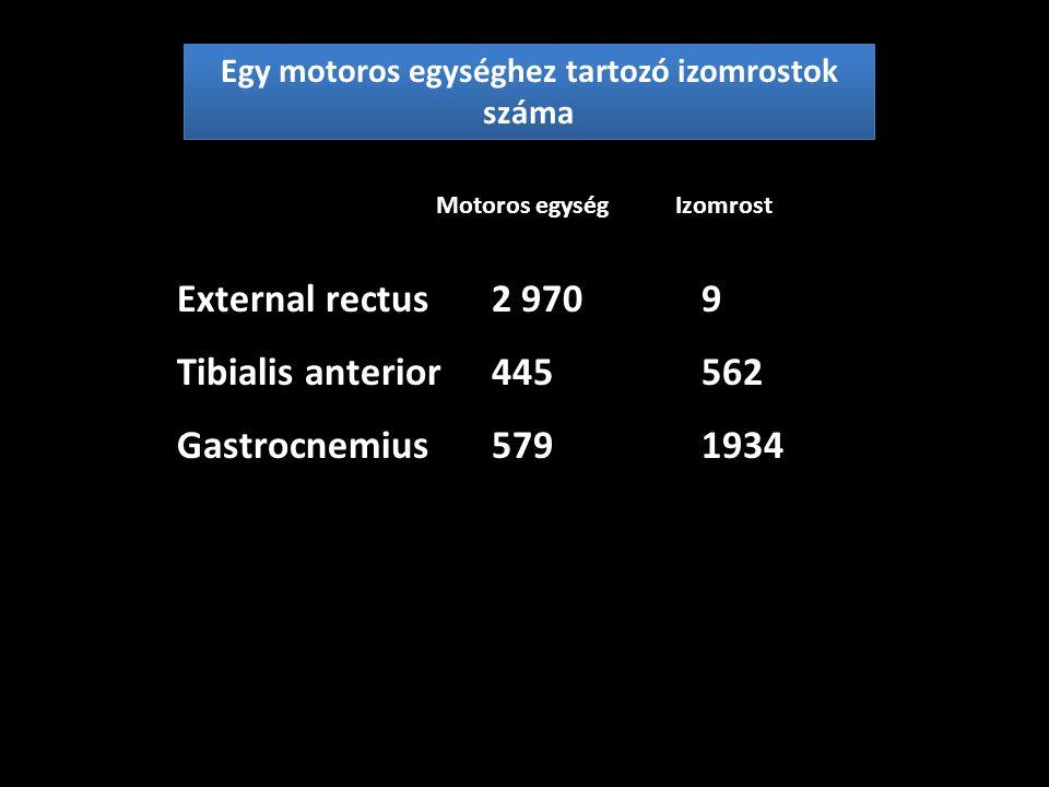 A motoros egységek száma egyes izmokban Biceps brachii109 Tibialis anterior256 Vastus lateralis224 Soleus957