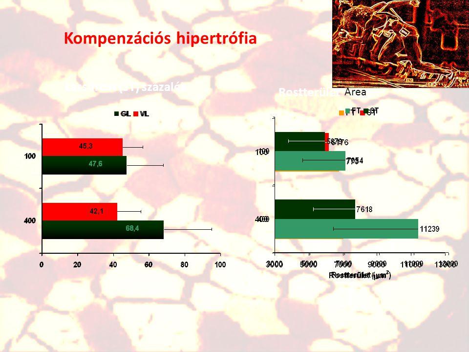 ST% in gastrocnemius and vastus lateralis ST% - lassúrost százalék A különböző izmok rostösszetétele hasonló, de különböző is lehet ugyanazon személy
