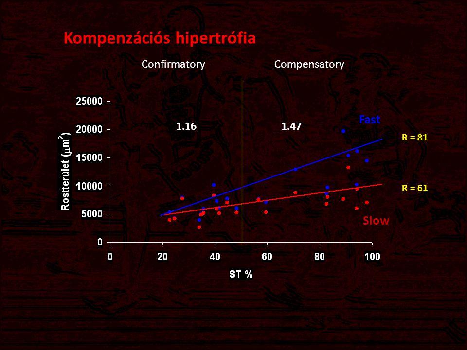Kompenzációs hipertrófia Lassúrost (ST) százalék Area Rostterület