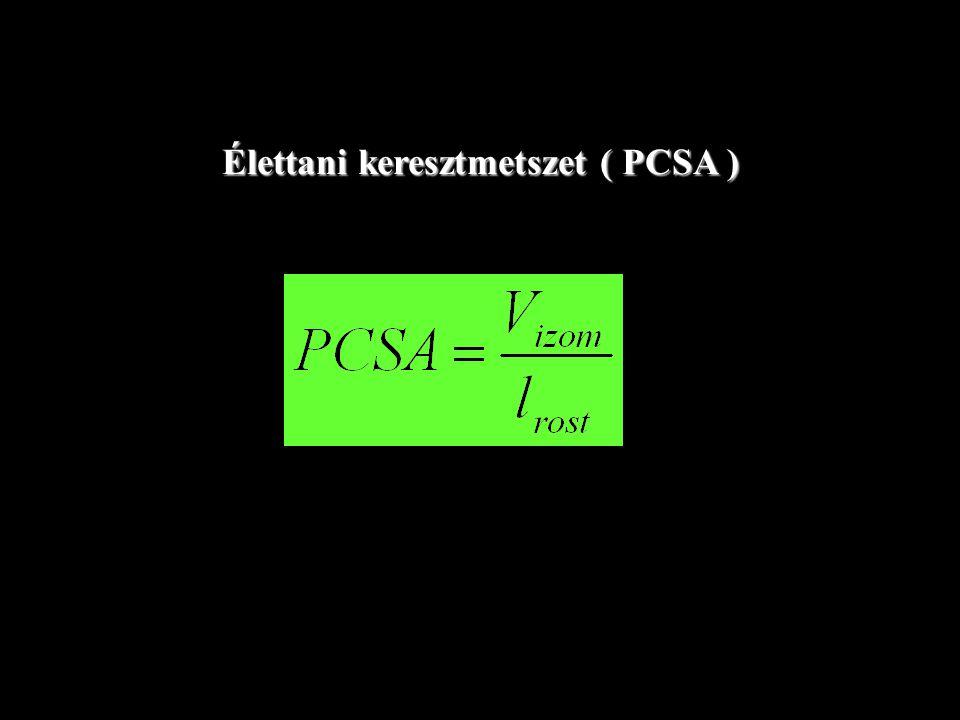 Az élettani keresztmetszet kiszámítása ( PCSA ) PCSA = izomtömeg x cos  rosthossz x sűrűség (1.067 g/ cm3 )