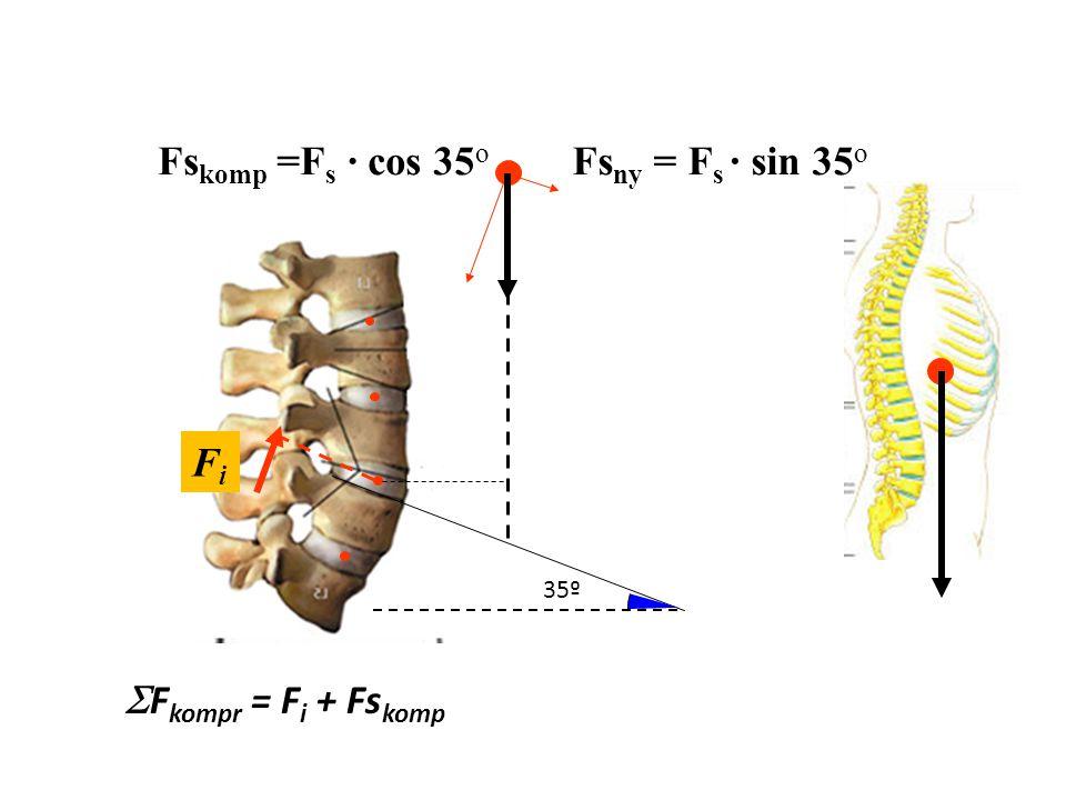 lsls F s M súlyerő = F s · l s lili F izom M i = F i · l i F s · l s = F i · l i Tövisnyúlvány (processus spinosus)