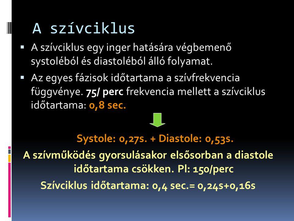 A szívciklus  A szívciklus egy inger hatására végbemenő systoléból és diastoléból álló folyamat.  Az egyes fázisok időtartama a szívfrekvencia függv