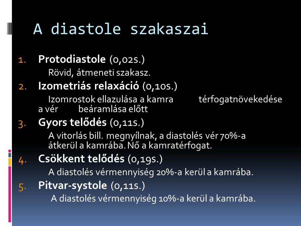 A diastole szakaszai 1.Protodiastole (0,02s.) Rövid, átmeneti szakasz. 2.Izometriás relaxáció (0,10s.) Izomrostok ellazulása a kamra térfogatnövekedés