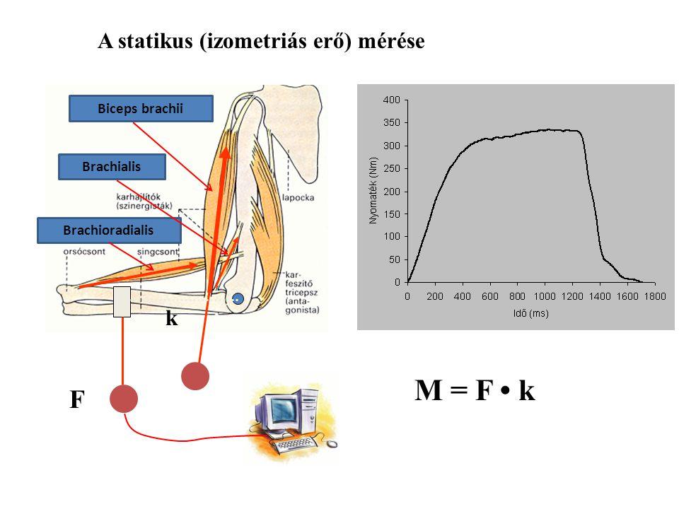 F tartó =mg/2 k FmFm mg=600N F tartó =mg/2=300N M váll =F tartó k = 225Nm k m =3cm (széles hátizom) k F =75cm F m =7500N F tartó k = F m k m Mekkora l