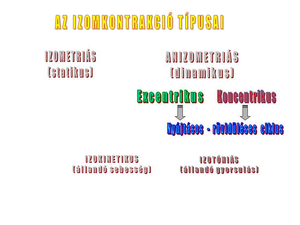 Nyomaték egyensúly Nettó nyomaték = M i – (M G1 + M G2 ) = 0 M i = M G1 + M G2 M i > M G1 + M G2 M i < M G1 + M G2 Izometriás kontrakció Koncentrikus