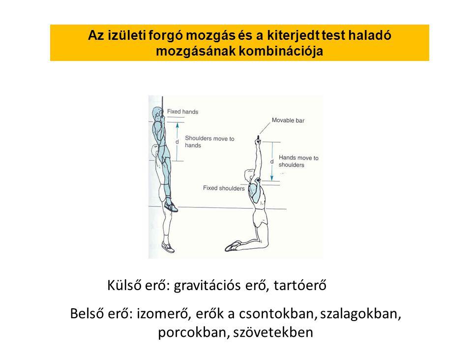 Az izületi forgó mozgás és a kiterjedt test haladó mozgásának kombinációja Külső erő: gravitációs erő, tartóerő Belső erő: izomerő, erők a csontokban, szalagokban, porcokban, szövetekben