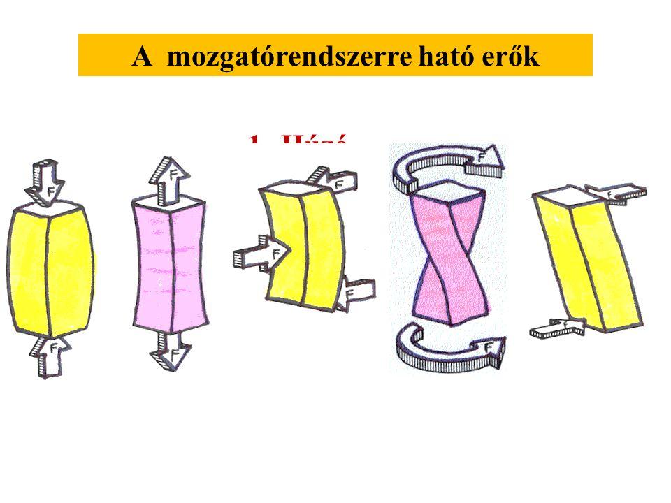 Az izületi forgó mozgás és a kiterjedt test haladó mozgásának kombinációja Külső erő: gravitációs erő, tartóerő Belső erő: izomerő, erők a csontokban,