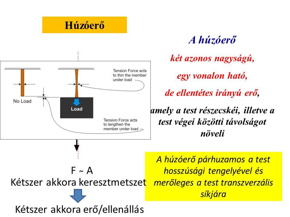 Húzóerő A húzóerő két azonos nagyságú, egy vonalon ható, de ellentétes irányú erő, amely a test részecskéi, illetve a test végei közötti távolságot növeli A húzóerő párhuzamos a test hosszúsági tengelyével és merőleges a test transzverzális síkjára Kétszer akkora keresztmetszet Kétszer akkora erő/ellenállás F ̴ A