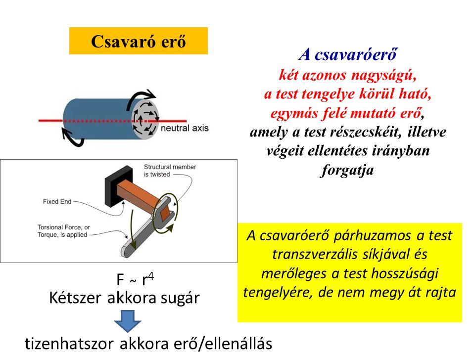 Csavaró erő A csavaróerő két azonos nagyságú, a test tengelye körül ható, egymás felé mutató erő, amely a test részecskéit, illetve végeit ellentétes irányban forgatja A csavaróerő párhuzamos a test transzverzális síkjával és merőleges a test hosszúsági tengelyére, de nem megy át rajta Kétszer akkora sugár tizenhatszor akkora erő/ellenállás F ̴ r 4
