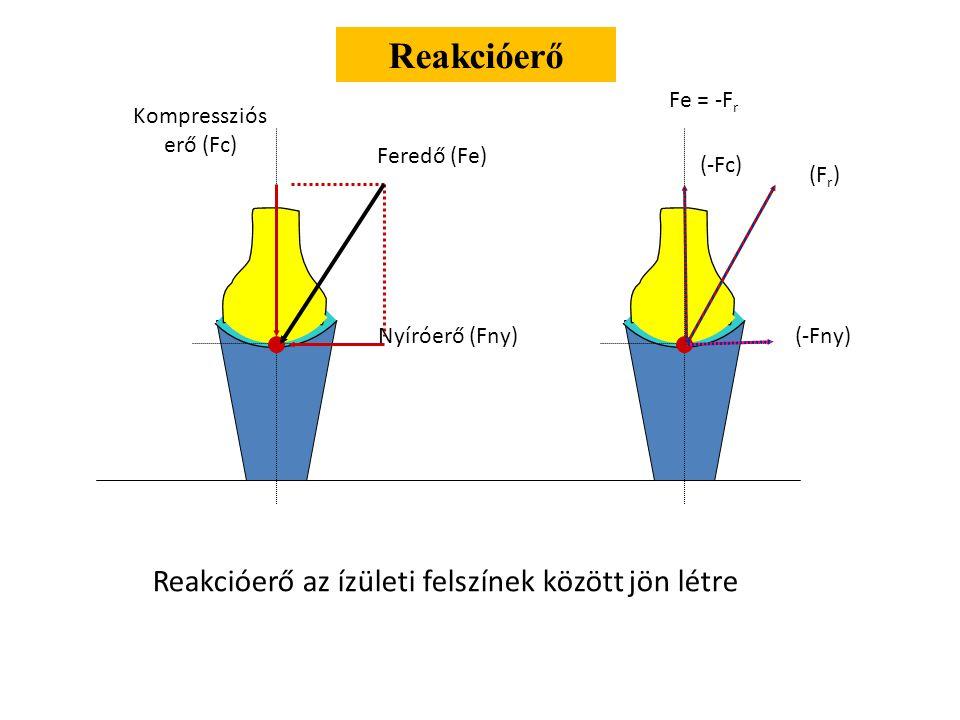 Nyíróerő (Fny) Feredő (Fe) Kompressziós erő (Fc) Reakcióerő (F r ) (-Fc) (-Fny) Fe = -F r Reakcióerő az ízületi felszínek között jön létre