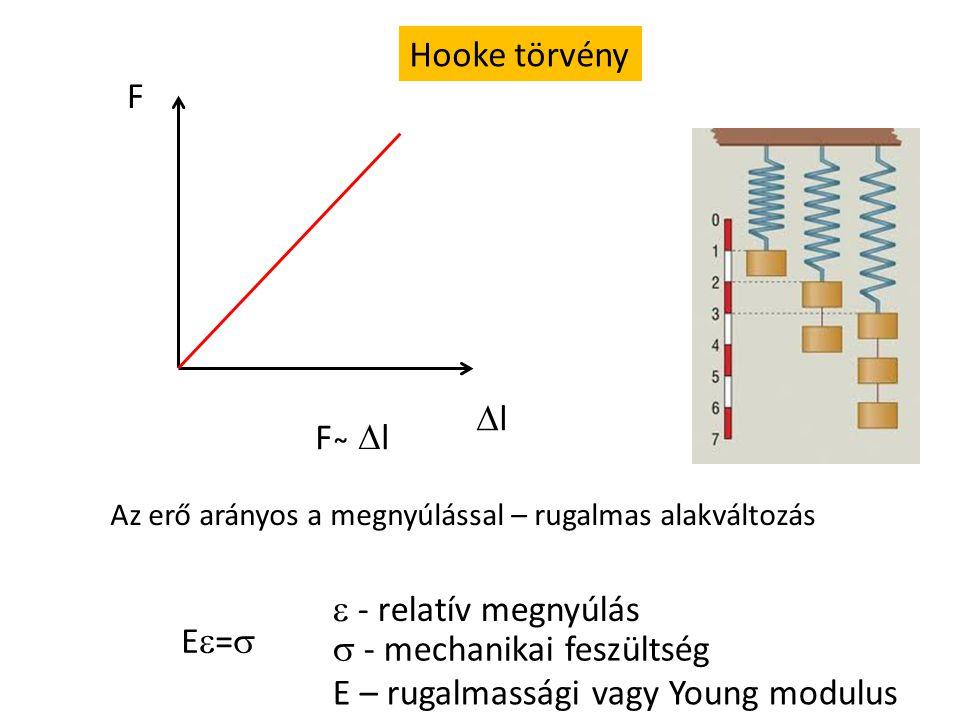 Hooke törvény F ll E=E=  - relatív megnyúlás  - mechanikai feszültség F ̴  l E – rugalmassági vagy Young modulus Az erő arányos a megnyúlással – rugalmas alakváltozás