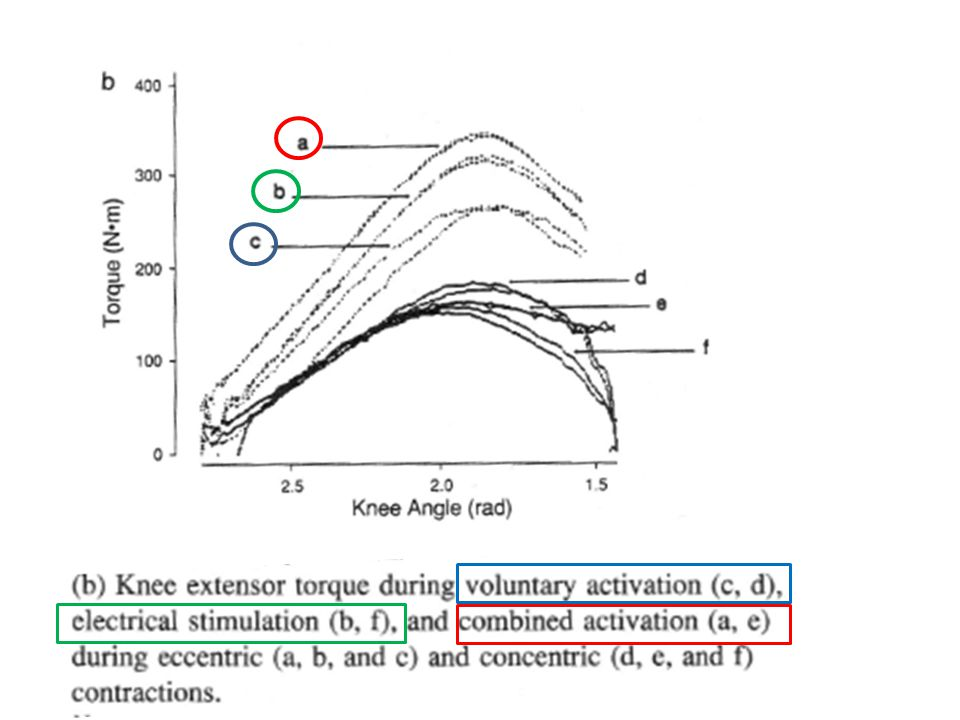 Body Temperature Muscle function is most efficient at 38.5°C (101°F).