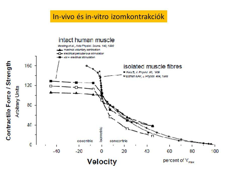 Párhuzamos Tollazott Izomhossz20 cm20 cm Rosthossz20 cm4 cm Szarkomér hossz2 um2 um Szarkomer/rost100 00020 000 Rövidülési sebesség (rost)10 u/s10 u/s Rövidülési sebesség (izom) 100 cm/s15 cm/s Az orsó alakú és a tollazott izmok rövidülési sebessége 15 cm/s
