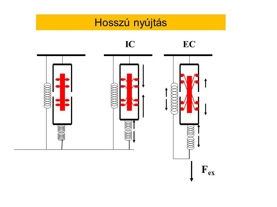 Hol raktározódik az elasztikus energia az izomban? Rövid nyújtás: sorba kapcsolt elasztikus elemekben (pl. inak) Rövid nyújtás: sorba kapcsolt elaszti