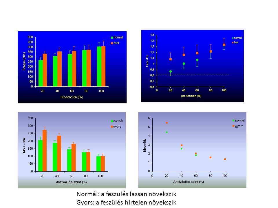 A forgatónyomaték kifejlődésére az izom aktivációs szintjének hatása Slow (normal)Fast
