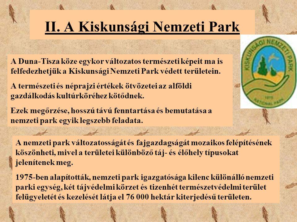 II. A Kiskunsági Nemzeti Park A Duna-Tisza köze egykor változatos természeti képeit ma is felfedezhetjük a Kiskunsági Nemzeti Park védett területein.
