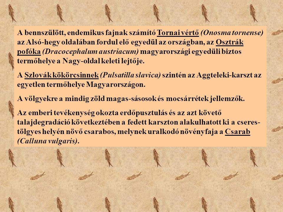 A bennszülött, endemikus fajnak számító Tornai vértő (Onosma tornense) az Alsó-hegy oldalában fordul elő egyedül az országban, az Osztrák pofóka (Drac