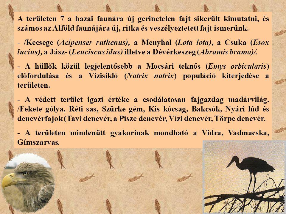 A területen 7 a hazai faunára új gerinctelen fajt sikerült kimutatni, és számos az Alföld faunájára új, ritka és veszélyeztetett fajt ismerünk. - /Kec