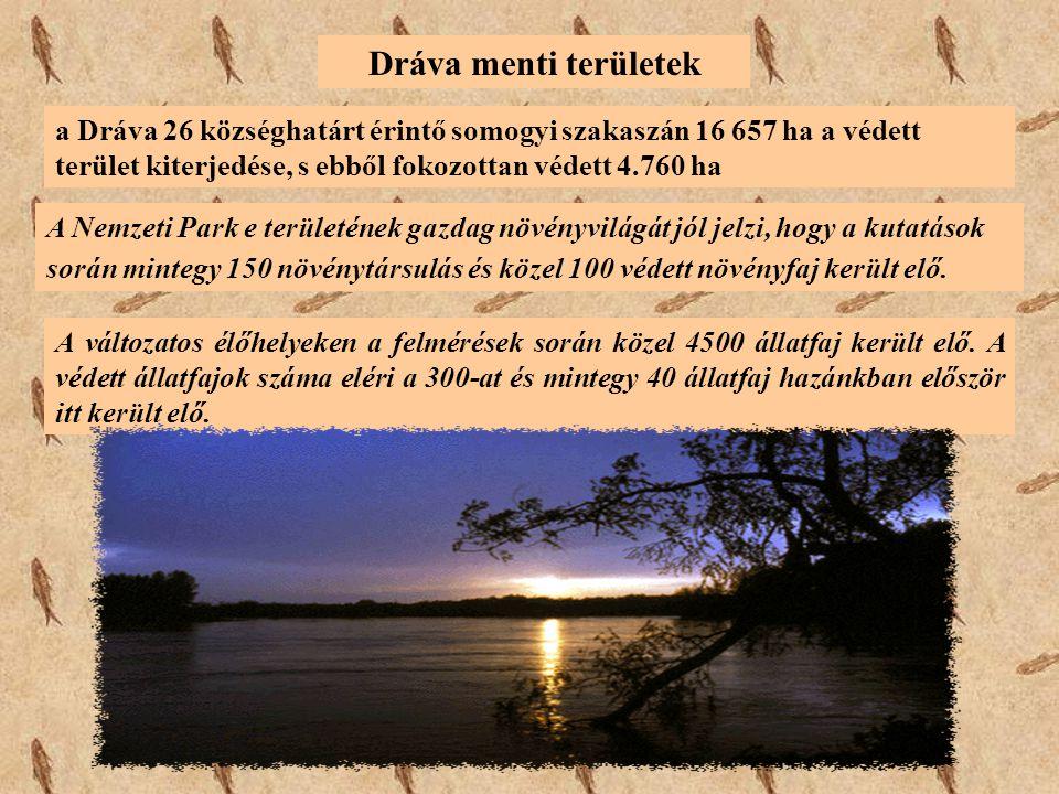 a Dráva 26 községhatárt érintő somogyi szakaszán 16 657 ha a védett terület kiterjedése, s ebből fokozottan védett 4.760 ha Dráva menti területek A Ne