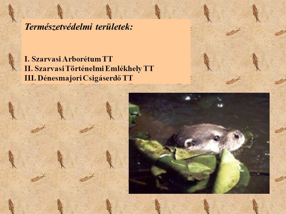 Természetvédelmi területek: I. Szarvasi Arborétum TT II. Szarvasi Történelmi Emlékhely TT III. Dénesmajori Csigáserdő TT
