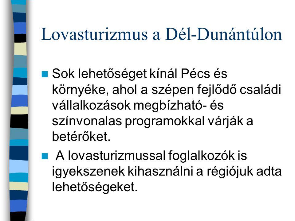 Lovasturizmus a Dél-Dunántúlon Sok lehetőséget kínál Pécs és környéke, ahol a szépen fejlődő családi vállalkozások megbízható- és színvonalas programo