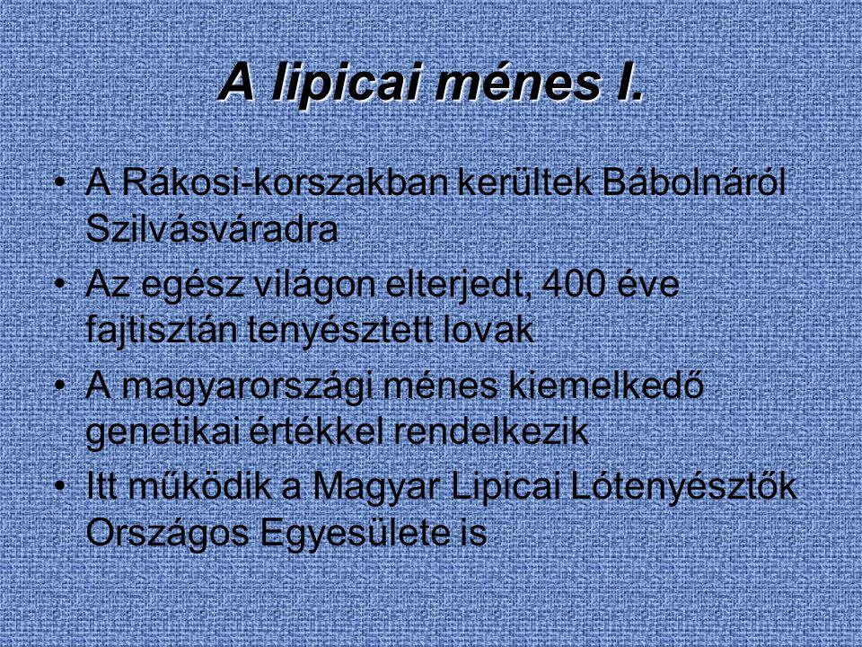 A lipicai ménes I. A Rákosi-korszakban kerültek Bábolnáról Szilvásváradra Az egész világon elterjedt, 400 éve fajtisztán tenyésztett lovak A magyarors
