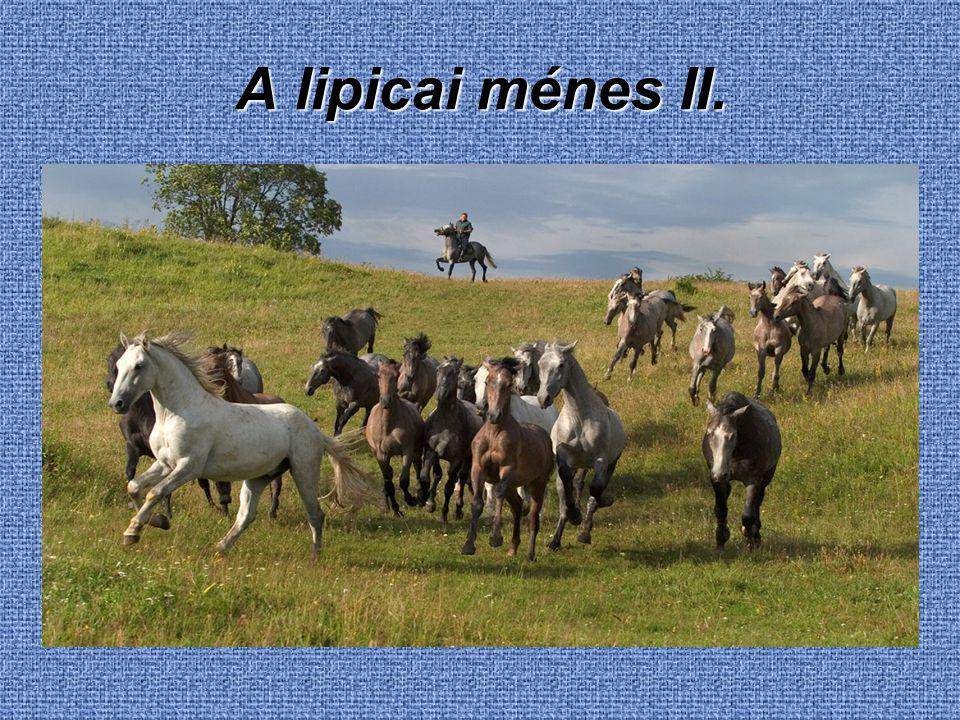 A lipicai ménes II.