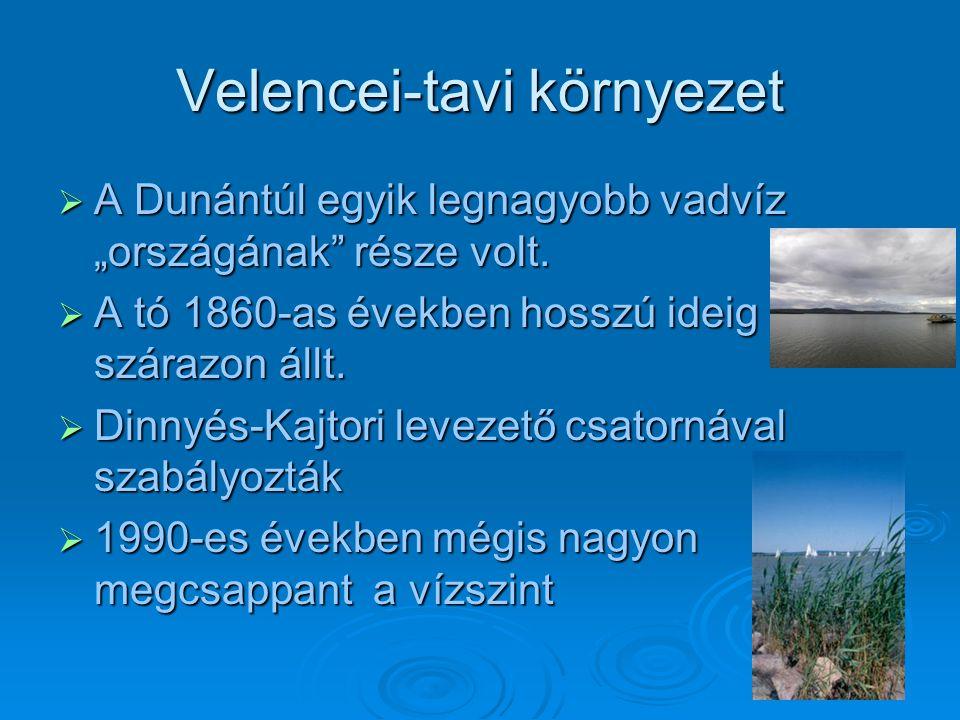 """Velencei-tavi környezet  A Dunántúl egyik legnagyobb vadvíz """"országának része volt."""