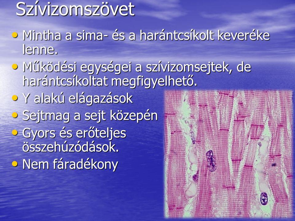 Harántcsíkolt izomszövet Sima izomszövet Szívizomszö- vet Hol található.