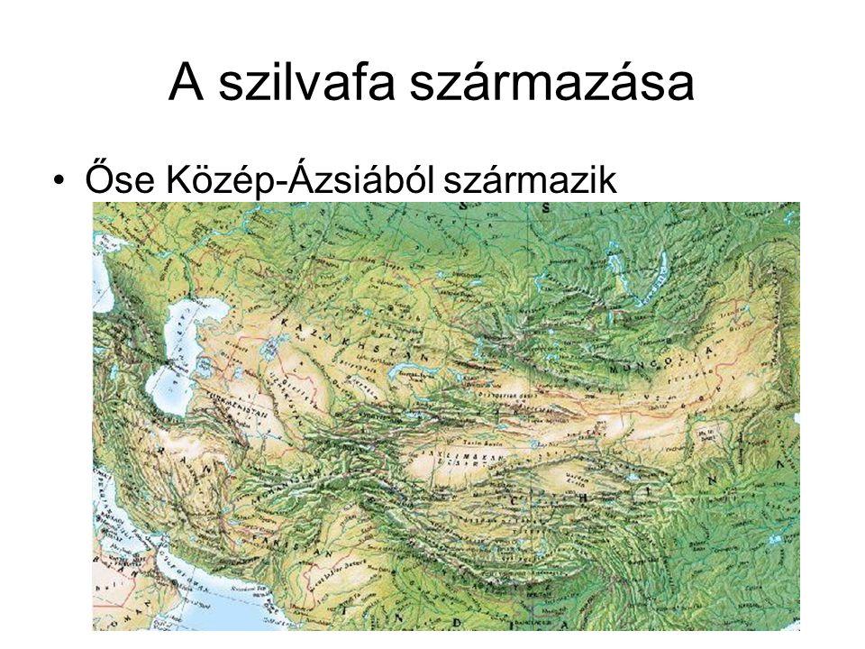 A szilvafa származása Őse Közép-Ázsiából származik