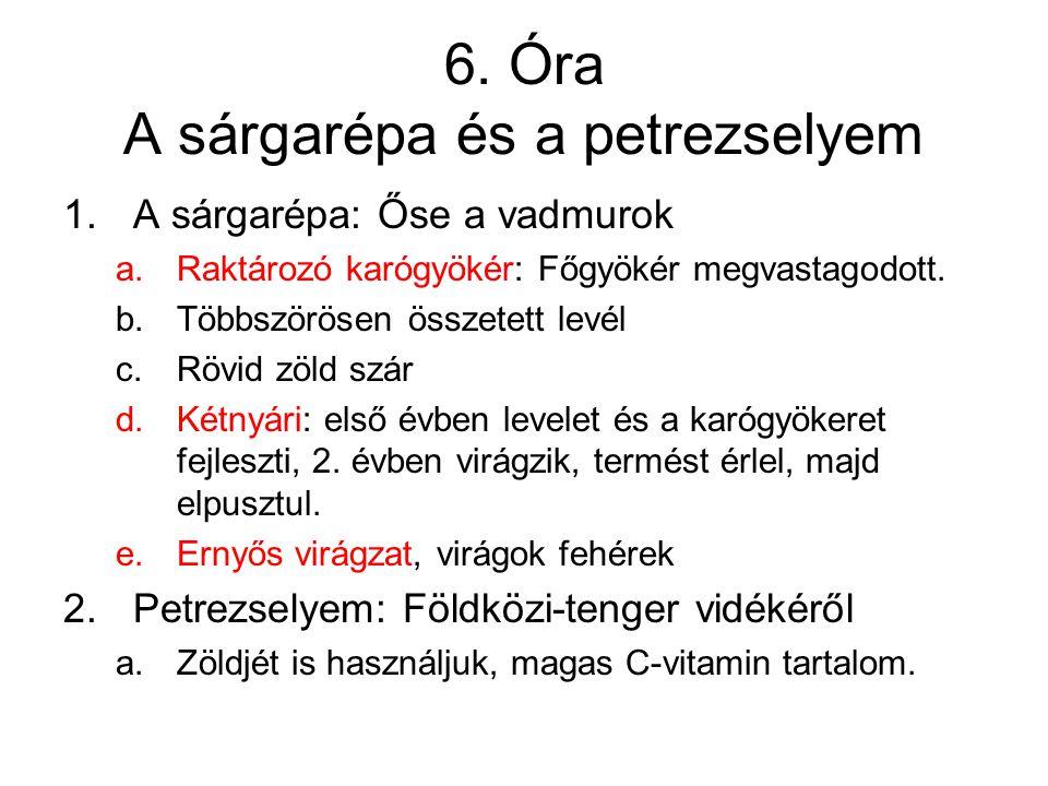 6. Óra A sárgarépa és a petrezselyem 1.A sárgarépa: Őse a vadmurok a.Raktározó karógyökér: Főgyökér megvastagodott. b.Többszörösen összetett levél c.R
