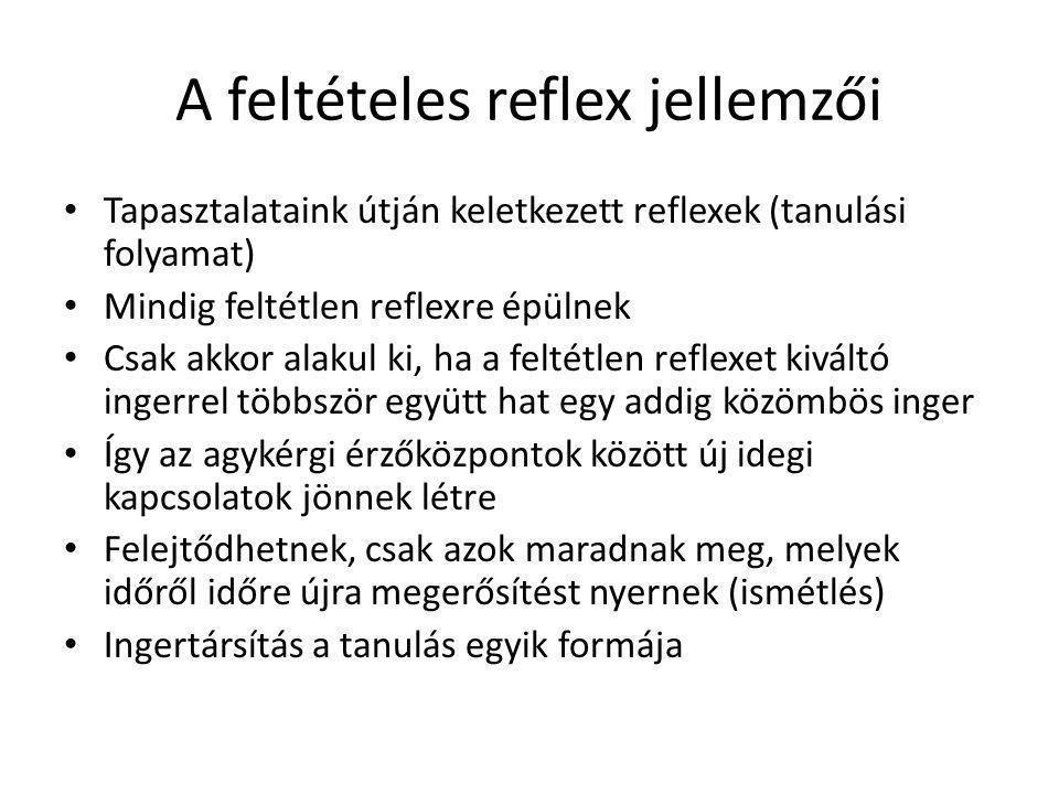 A feltételes reflex jellemzői Tapasztalataink útján keletkezett reflexek (tanulási folyamat) Mindig feltétlen reflexre épülnek Csak akkor alakul ki, h