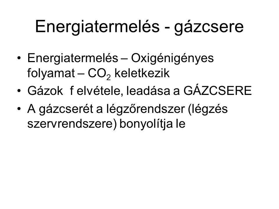 Energiatermelés - gázcsere Energiatermelés – Oxigénigényes folyamat – CO 2 keletkezik Gázok f elvétele, leadása a GÁZCSERE A gázcserét a légzőrendszer