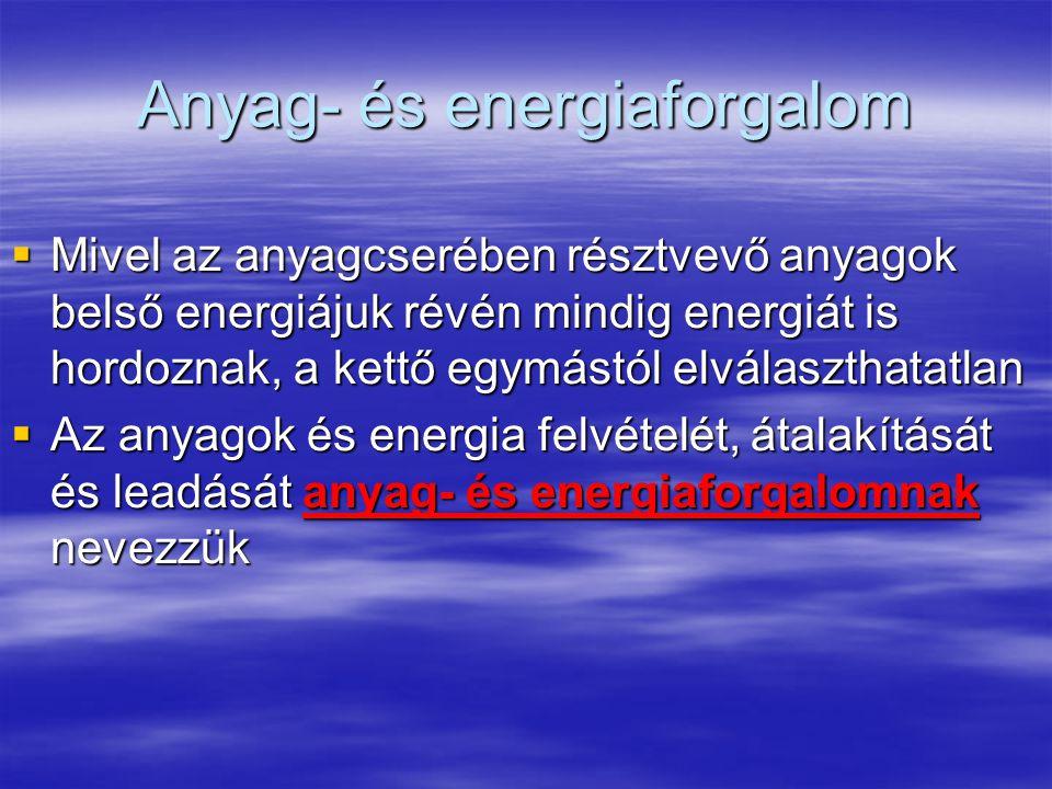 Anyag- és energiaforgalom  Mivel az anyagcserében résztvevő anyagok belső energiájuk révén mindig energiát is hordoznak, a kettő egymástól elválaszthatatlan  Az anyagok és energia felvételét, átalakítását és leadását anyag- és energiaforgalomnak nevezzük