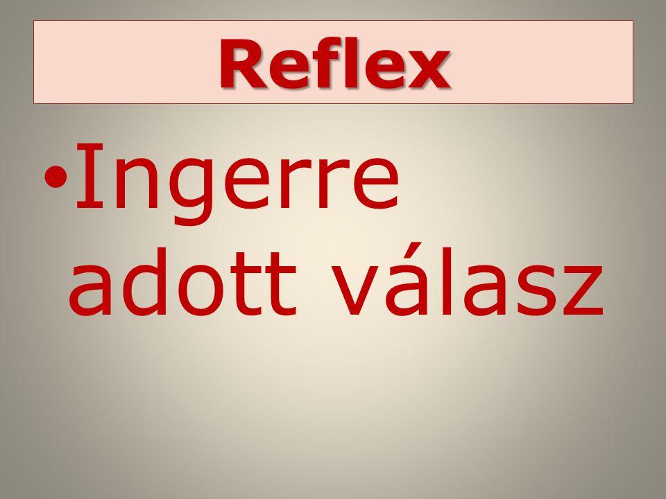 Reflex Ingerre adott válasz