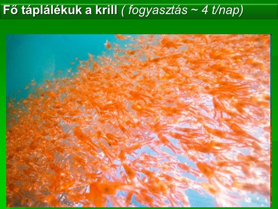 Fő táplálékuk a krill ( fogyasztás ~ 4 t/nap)