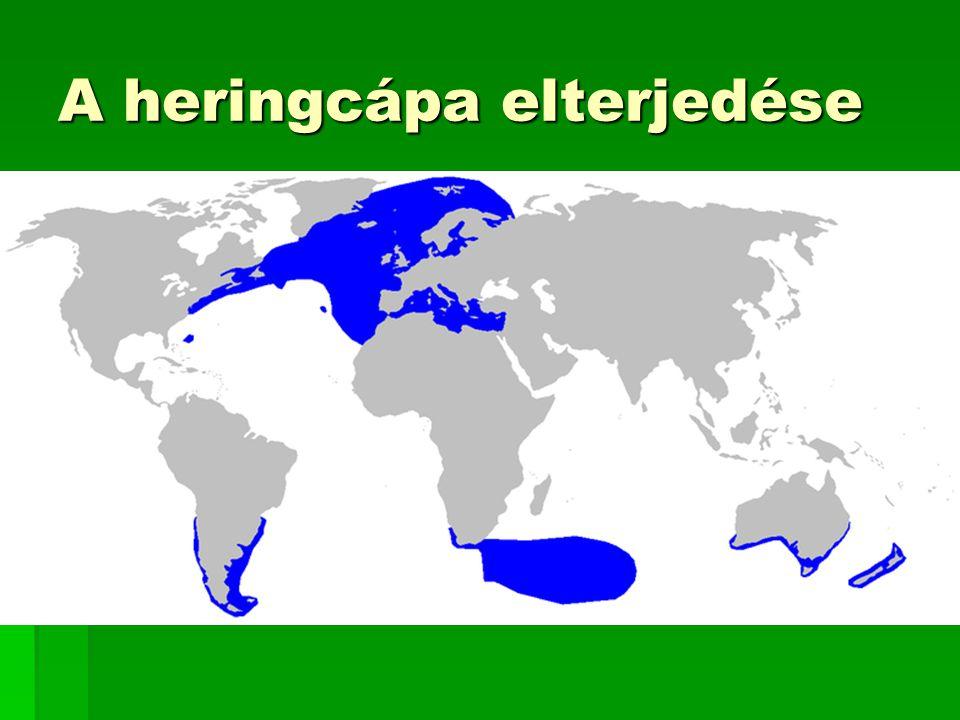 A heringcápa elterjedése