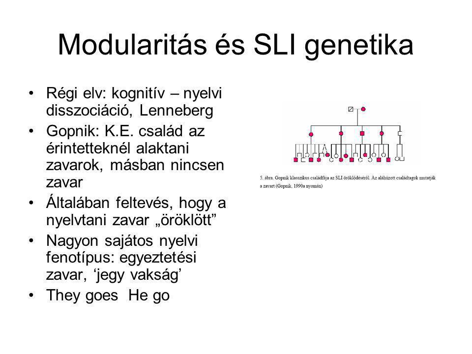 Modularitás és SLI genetika Régi elv: kognitív – nyelvi disszociáció, Lenneberg Gopnik: K.E. család az érintetteknél alaktani zavarok, másban nincsen