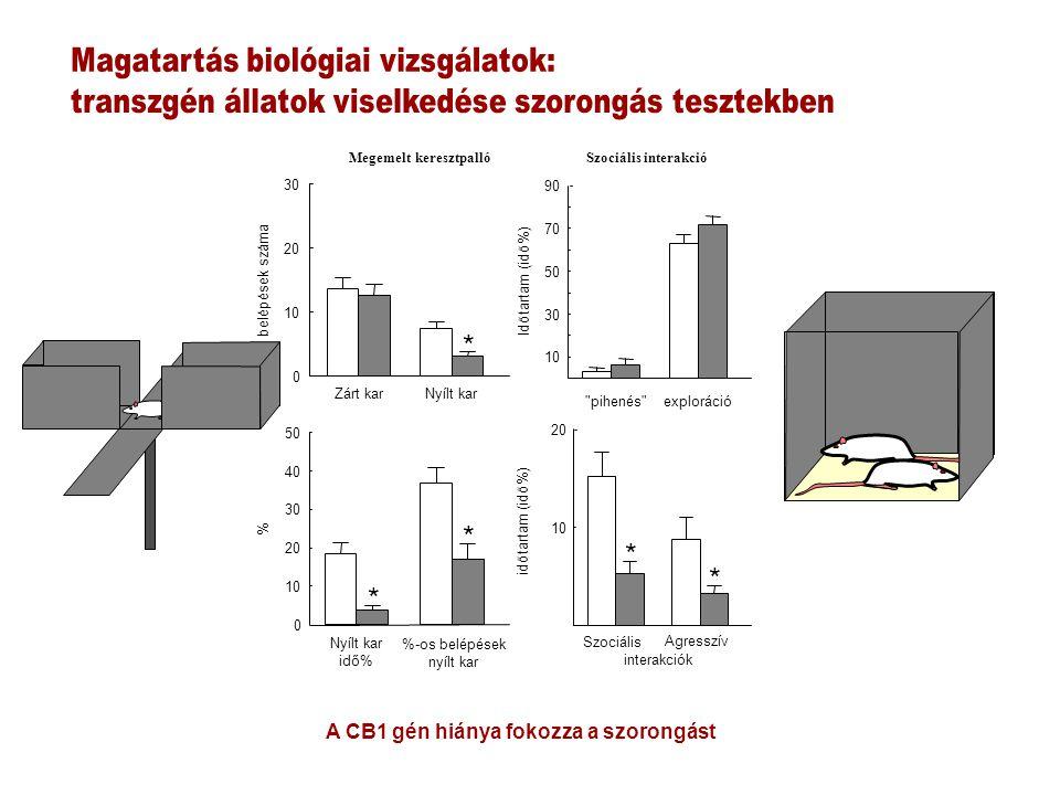 0 10 20 30 Nyílt kar idő% %-os belépések nyílt kar 0 10 20 30 40 50 * * Zárt karNyílt kar * belépések száma % Megemelt keresztpalló 10 30 50 70 90 Időtartam (idő%) 10 20 * időtartam (idő%) pihenés exploráció Szociális interakciók Agresszív * Szociális interakció A CB1 gén hiánya fokozza a szorongást